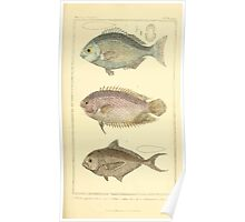 The Animal Kingdom by Georges Cuvier, PA Latreille, and Henry McMurtrie 1834  133 - Pisces Fish Poster