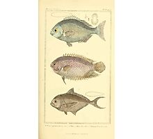 The Animal Kingdom by Georges Cuvier, PA Latreille, and Henry McMurtrie 1834  133 - Pisces Fish Photographic Print
