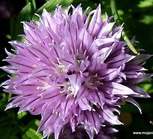 Chives by AbsintheFairy