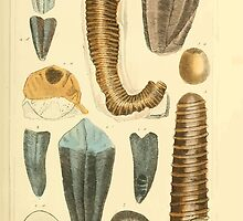 The Animal Kingdom by Georges Cuvier, PA Latreille, and Henry McMurtrie 1834  222 - Mollusca Mollusks by wetdryvac