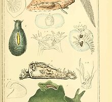 The Animal Kingdom by Georges Cuvier, PA Latreille, and Henry McMurtrie 1834  229 - Mollusca Mollusks by wetdryvac