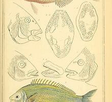 The Animal Kingdom by Georges Cuvier, PA Latreille, and Henry McMurtrie 1834  089 - Pisces Fish by wetdryvac