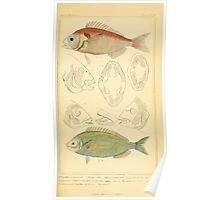 The Animal Kingdom by Georges Cuvier, PA Latreille, and Henry McMurtrie 1834  089 - Pisces Fish Poster