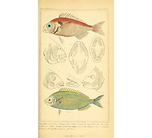 The Animal Kingdom by Georges Cuvier, PA Latreille, and Henry McMurtrie 1834  089 - Pisces Fish Photographic Print