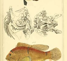 The Animal Kingdom by Georges Cuvier, PA Latreille, and Henry McMurtrie 1834  092 - Pisces Fish by wetdryvac