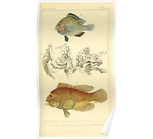 The Animal Kingdom by Georges Cuvier, PA Latreille, and Henry McMurtrie 1834  092 - Pisces Fish Poster