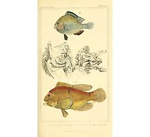 The Animal Kingdom by Georges Cuvier, PA Latreille, and Henry McMurtrie 1834  092 - Pisces Fish Photographic Print