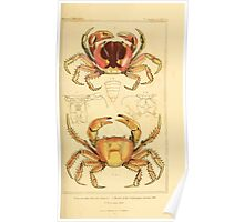 The Animal Kingdom by Georges Cuvier, PA Latreille, and Henry McMurtrie 1834  319 - Crustacea Crustaeans Poster