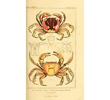 The Animal Kingdom by Georges Cuvier, PA Latreille, and Henry McMurtrie 1834  319 - Crustacea Crustaeans Photographic Print