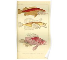 The Animal Kingdom by Georges Cuvier, PA Latreille, and Henry McMurtrie 1834  086 - Pisces Fish Poster