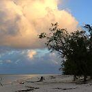 Aldabra Atoll at dawn by Gina Ruttle  (Whalegeek)