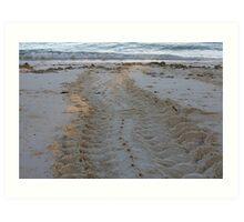 Turtle Tracks In The Sand Art Print