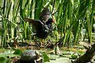 Neighbouring wildlife I by zumi