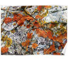 """'Beach Lichens"""" Poster"""
