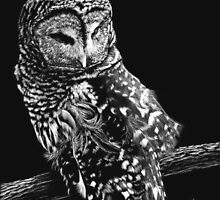 A Lost Feather - barred owl by Heather Ward