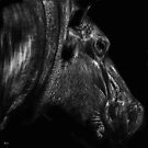 Glistening - hippo by Heather Ward