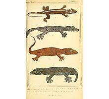 The Animal Kingdom by Georges Cuvier, PA Latreille, and Henry McMurtrie 1834  014 - Reptilia Reptiles Photographic Print