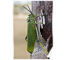 Locust on Palm Tree Bark Poster