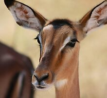 hey Beautiful! by Susan van Zyl