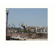 Pelican in flight Art Print