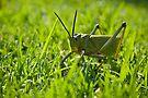 Locust - Head on by RatManDude