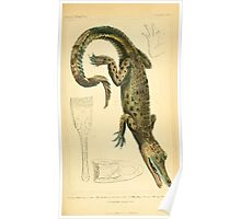 The Animal Kingdom by Georges Cuvier, PA Latreille, and Henry McMurtrie 1834  003 - Reptilia Reptiles Poster