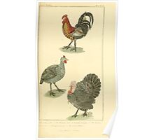The Animal Kingdom by Georges Cuvier, PA Latreille, and Henry McMurtrie 1834 601 - Aves, Avians, Birds Poster