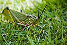 Locust - Close Up by RatManDude
