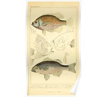 The Animal Kingdom by Georges Cuvier, PA Latreille, and Henry McMurtrie 1834  065 - Pisces Fish Poster