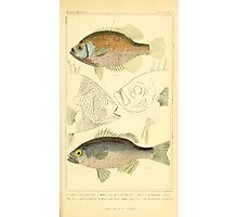 The Animal Kingdom by Georges Cuvier, PA Latreille, and Henry McMurtrie 1834  065 - Pisces Fish Photographic Print