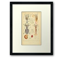 The Animal Kingdom by Georges Cuvier, PA Latreille, and Henry McMurtrie 1834  211 - Mollusca Mollusks Framed Print