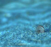 Underwater Seashell by AngieM