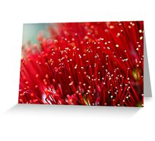 Pohutukawa Flower Greeting Card