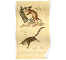 The Animal Kingdom by Georges Cuvier, PA Latreille, and Henry McMurtrie 1834 600 - Mammalia Mammals Poster