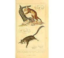 The Animal Kingdom by Georges Cuvier, PA Latreille, and Henry McMurtrie 1834 600 - Mammalia Mammals Photographic Print
