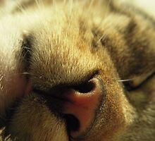 Tongue Tip by Tama Blough