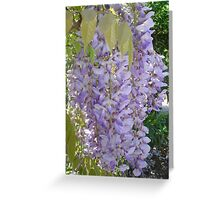 Wisteria Racemes Greeting Card