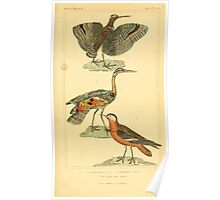 The Animal Kingdom by Georges Cuvier, PA Latreille, and Henry McMurtrie 1834 740 - Aves Avians Birds Poster