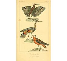 The Animal Kingdom by Georges Cuvier, PA Latreille, and Henry McMurtrie 1834 740 - Aves Avians Birds Photographic Print