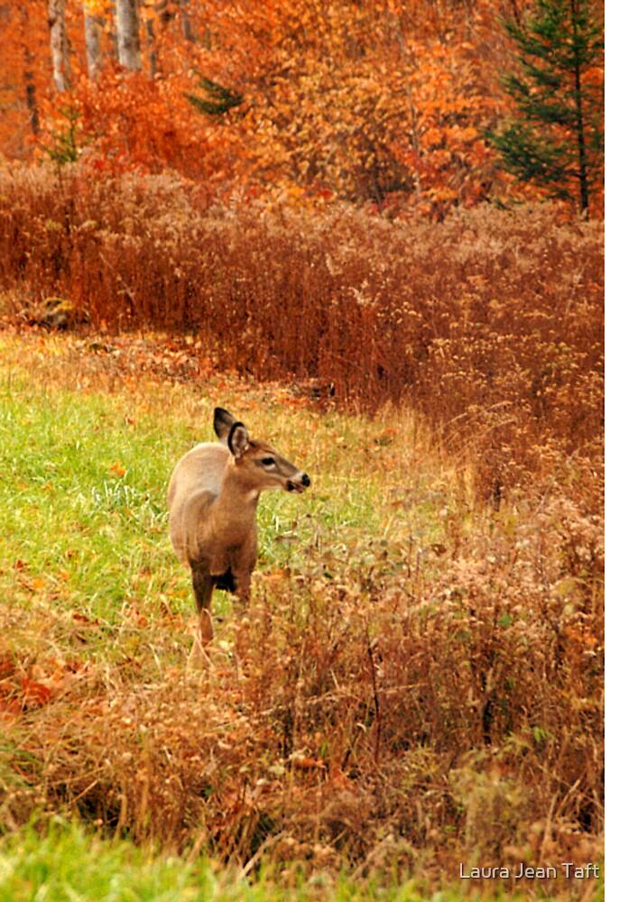 Adirondack Deer by Laura Jean Taft