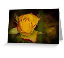 Rose After the Rain Greeting Card