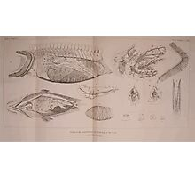 The Animal Kingdom by Georges Cuvier, PA Latreille, and Henry McMurtrie 1834  210 - Pisces Fish Photographic Print