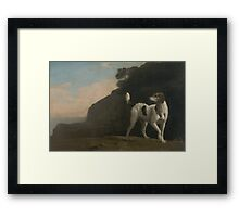 Young Foxhound Framed Print
