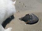 Encounter The Horseshoe Crab by Jack McCabe