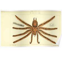 The Animal Kingdom by Georges Cuvier, PA Latreille, and Henry McMurtrie 1834  360 - Arachnides Arachnids Poster
