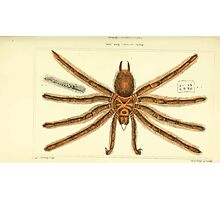 The Animal Kingdom by Georges Cuvier, PA Latreille, and Henry McMurtrie 1834  360 - Arachnides Arachnids Photographic Print