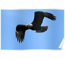 Bald Eagle The Symbol Of America Poster