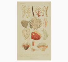 The Animal Kingdom by Georges Cuvier, PA Latreille, and Henry McMurtrie 1834  559 - Zoophytes Plant-Like Animals Kids Tee