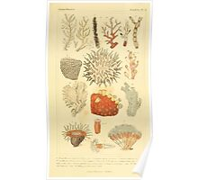 The Animal Kingdom by Georges Cuvier, PA Latreille, and Henry McMurtrie 1834  559 - Zoophytes Plant-Like Animals Poster
