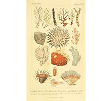 The Animal Kingdom by Georges Cuvier, PA Latreille, and Henry McMurtrie 1834  559 - Zoophytes Plant-Like Animals Photographic Print